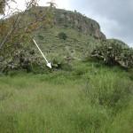 Unter den mit Kakteen überwachsenen Hügeln liegen weitere kleine Pyramidenstrukturen verborgen.