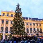 Christmas market at Schloss Schönbrunn