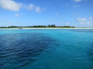 Wunderschön und artenreich: die kleine Insel Vavvaru im Lhaviyani Atoll (nördliche Malediven) besticht nicht nur durch weißen Sand und klares Wasser, sondern ist auch biologisch sehr interessant. Foto: Julia Türtscher.