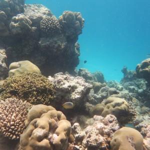 Die Korallenriffe um Vavvaru bieten mit ihren unzähligen Spalten und Höhlen einer Vielzahl von Arten einen Lebensraum. Foto: Patrick Jambura.