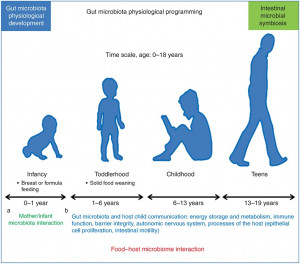The development of our intestinal microbiota over time. Many of the factors that contribute to our early exposure to microbes will influence our health for the rest of our lives. From: http://www.nature.com/pr/journal/v76/n1/fig_tab/pr201449f6.html Putignani L., et al., The human gut microbiota: a dynamic interplay with the host from birth to senescence settled during childhood. Pediatric Research (2014) 76, 2–10. doi:10.1038/pr.2014.49