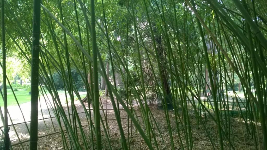 Mitten im Bambushain