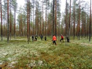 Meine finnischen Studienfreunde und ich sind hier auf einen Sprung in den Wald gefahren, um in einem riesengroßen Sumpf Cranberries zu sammeln.