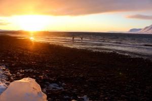 Die zurückgekehrte Sonne kann einen schon mal auf verrückte Ideen bringen! Eine ganz besondere Mutprobe: schwimmen im Nordpolarmeer.
