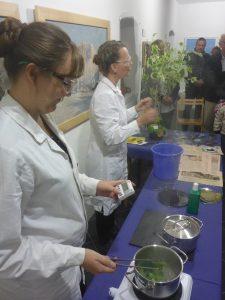 Abutilon-Blätter werden im heißen Wasser gekocht. li. Elisabeth Silberberger, Doris Engelmeier (© Michael Plöderl)