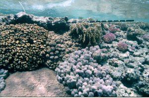 Korallenriff am Meeresgrund in der Nähe von Mars Alam in Ägypten